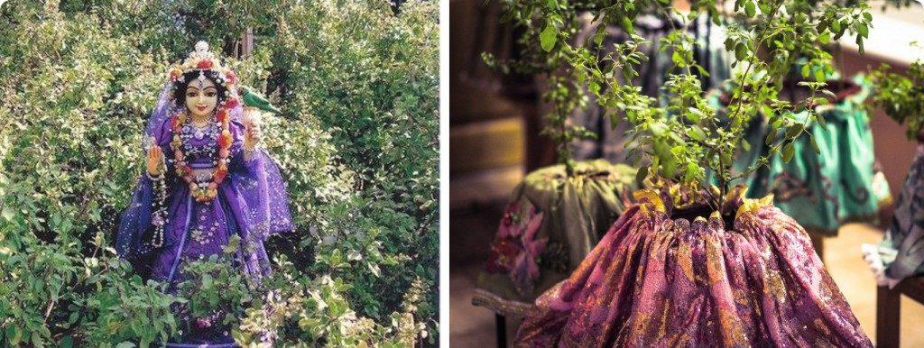 Туласи Деви - Божество и священное растение