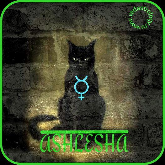 Ашлеша - символ (тотем) - кот