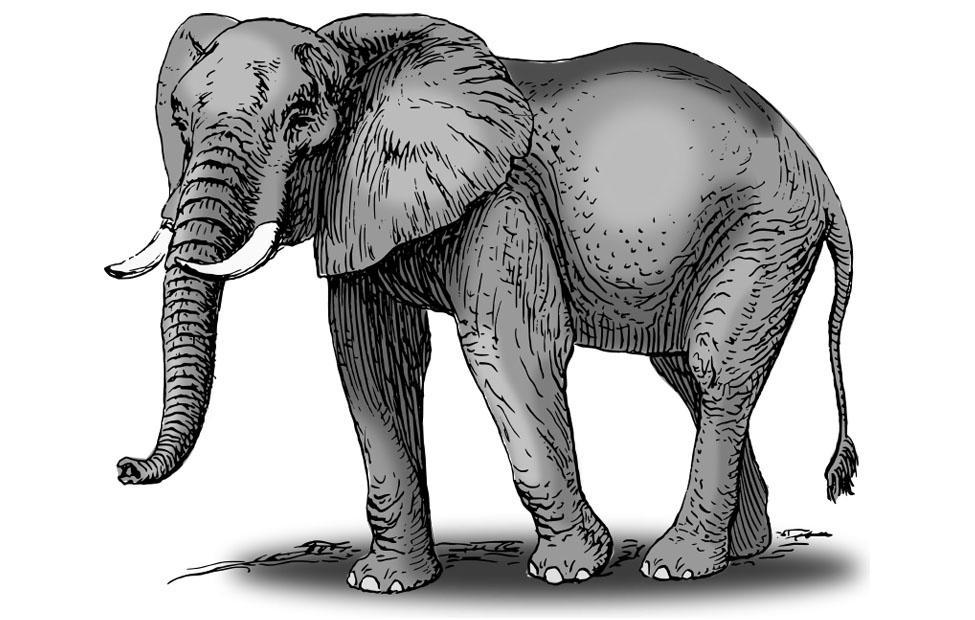 слон - символ Бхарани