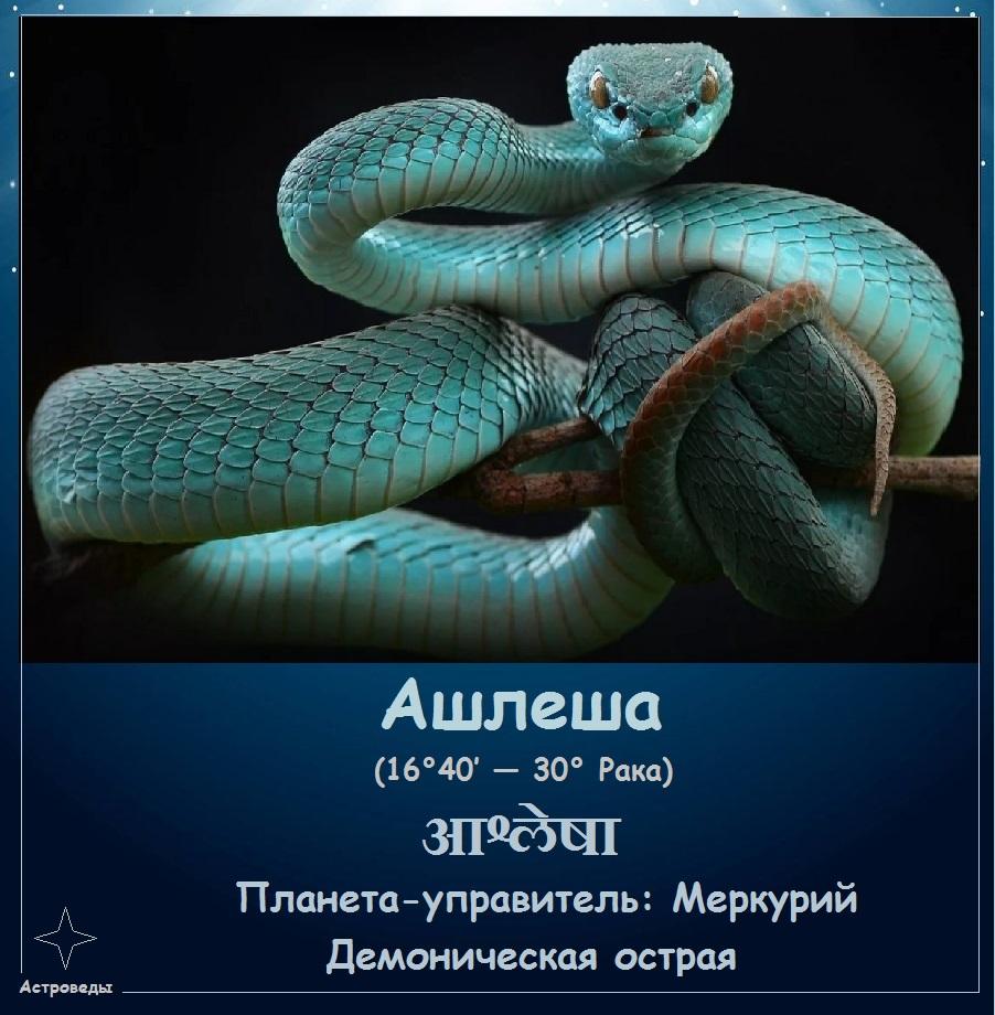 Ашлеша - 9-я накшатра
