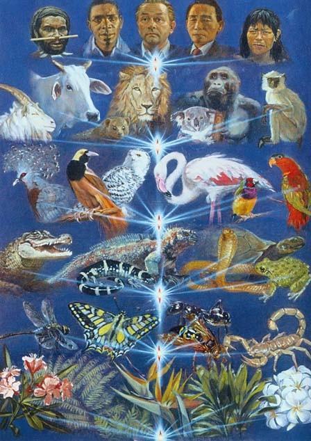 Махабхарата-130 - Эволюция души в материальном мире