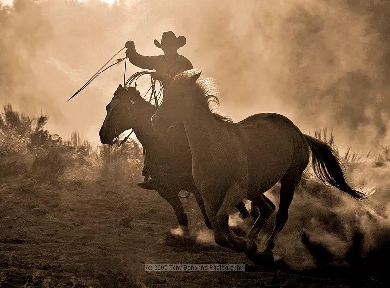 обуздание лошади