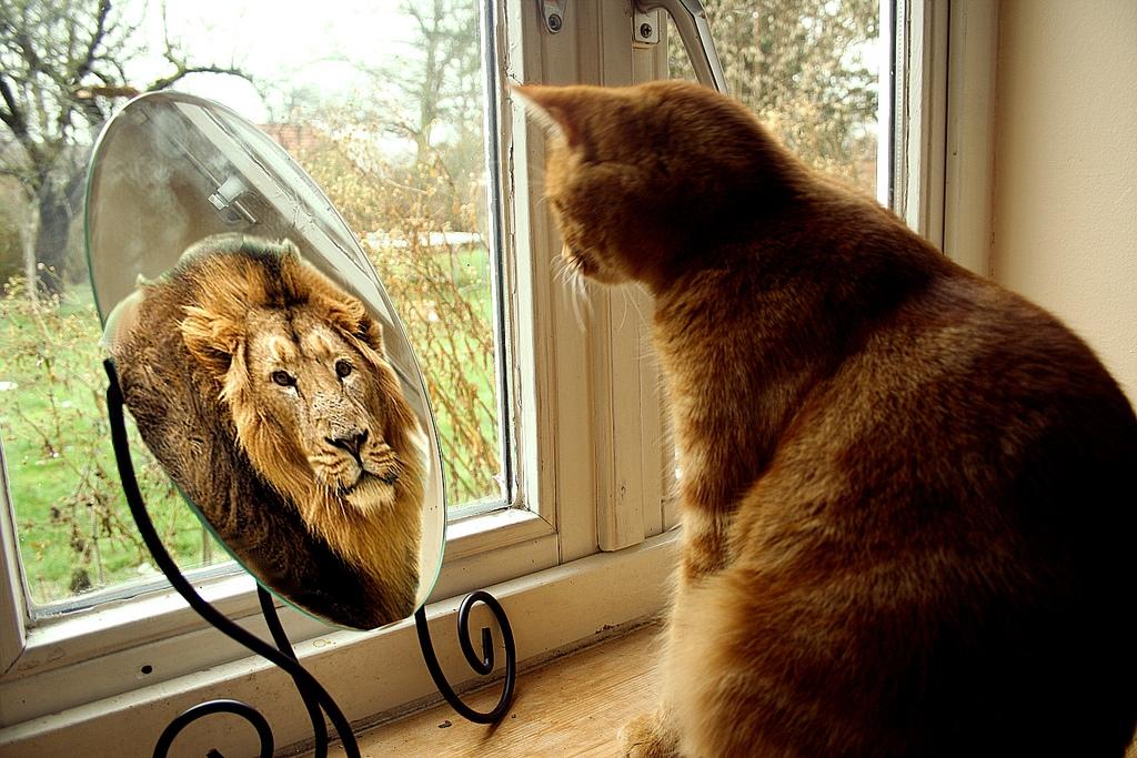 кот видит себя львом