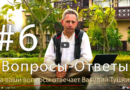 Вопросы-ответы Василия Тушкина: Духовная Мудрость Вед